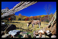 A horse eats grass in a pasture near the mountains.