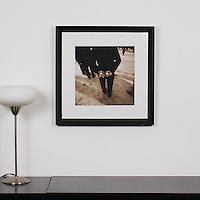 "D'Amore: ""Bachi Balls"", Digital Print, Image Dims. 14"" x 14"", Framed Dims. 23.25"" x 23.25"""