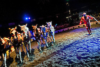 A horse trainer performs his act in Circus Renato, in San Salvador, El Salvador, 7 May 2011.