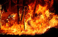 Trees burn during a bushfire near Sydney September 10, 2013. The Australian bushfire season has started early and is predicted to be a busy one as record high temperatures, strong winds and dry weather hit most of the country. Stringer/VIEWPRESS