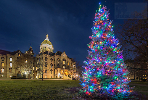 Dec. 9, 2015; Christmas tree and the Main Building.  (Photo by Barbara Johnston/University of Notre Dame)