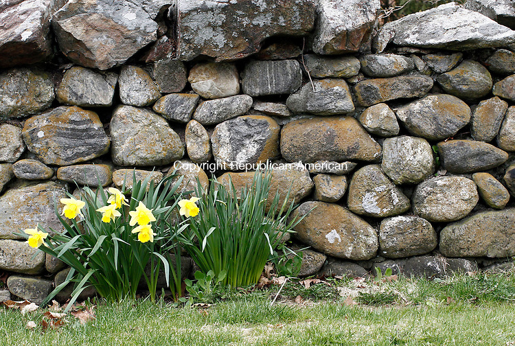 Middlebury, CT- 29 April 2014-042914CM03-country life--- Spring wild flowers grow alongside a stone wall on Quassepaug Road in Middlebury on Tuesday.   Christopher Massa Republican-American