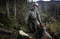 Cody Thomas, timber faller, works alone in the woods at Winter Harbor on Prince of Wales Island. Dangerous work, fallers listen for other saws between cuts to make sure no one is hurt. Cody wanted to be a timber faller since he was a kid, and following his father's lead. He got his first chain saw when he was 9 and he has been working since he turned 17. <br /> <br /> It is tiring work. He leaves home at 5 am, drives an hour to the site to work. He carries a heavy chain saw, walking with the grace of a ballet dancer on a maze of fallen trees.  His shoes are called corks--they have metal spikes in the bottom to walk on the trees without slipping, and they can cost $750.  Cody has a solid reputation as a timber faller and has supported him and a family for 13 years.