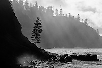 Coastline from Norfolk Island in Black and White