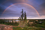 Rainbow over Boreal Forest, Northwest Territories, Canada.