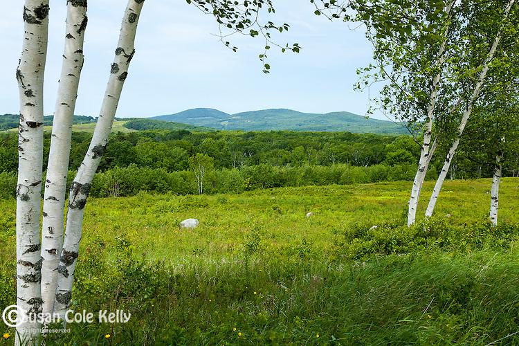 Beech Hill Preserve in Camden, Maine, USA