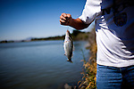 Jerry Strong catches a striper at Brannan Island State Recreation Area near Rio Vista, Calif., June 13, 2012. Brannan Island is one of ten state parks to be taken over by a private concession in an effort to prevent mass park closures. CREDIT: Max Whittaker/Prime for The Wall Street Journal.CALPARKS.