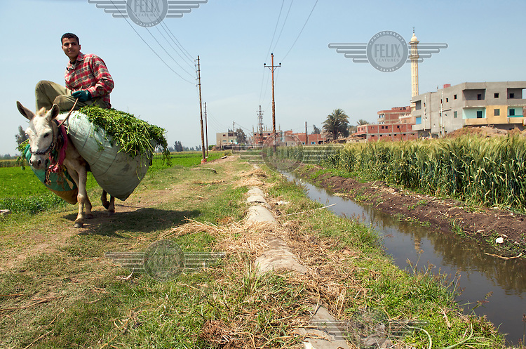 Irrigation channel fed by waters from the River Nile, allowing farmers to produce crops in the Nile Delta..