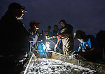 Personal Work<br /> <br /> Commercial fishermen strike their net for mullet in the Gulf at Shell Point and go about the sorting process of 3,000 + red, white and black roe mullet at Shell Point in Wakulla County, Florida.