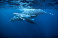 Mother and calf resting on the surface. (Photo by Underwater Photographer Matt Considine)