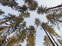 FOREST_LOCATION_90036