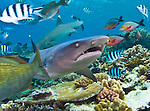 Fiji - Beqa Lagoon and Shark Reef
