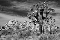 Joshua Tree Rock Outcropping - Infrared Black & White