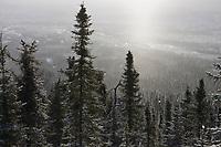 White Mountains National Recreation Area.