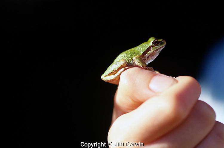 Green tree frog on young girls hand at park Lake Pleasant Bothell Washington State USA