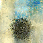 Bird's nest with three eggs. Photo based illustration.