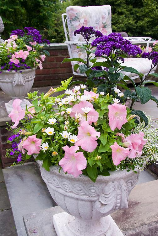 Container Cement Urn Of Petunias Chrysanthemum