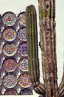 Cardon cactus with decorated plates in the Spanish colonial town of Todos Santos , Baja California Sur, Mexico