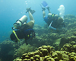 Diving Bonaire, Netherland Antilles -- Divers explore the reef. (&quot;Ol' Blue&quot; dive site).