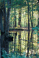 Flooded Forest on a Sunny Day in Summer