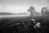Kirov (Vyatka) Region, Russia  .1998.In the early morning hours of the second day of a three-day pilgrimage across the Russian countryside a man washes himself in a small pool of water as the morning mist rises from the landscape. The people walk 21 hours a day and sleep 3 hours a night..
