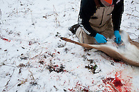 Donovan Nokes cleans a young buck he killed on Sunday, December 4, 2011 in Webster City, IA.