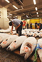 File photo - Frozen Tunas , Sep 5th 2008 : In the early morning, fishermen starts selling their fresh fish at the fish market in Tsukiji, Japan. (Photo by Takuya Matsunaga/AFLO)