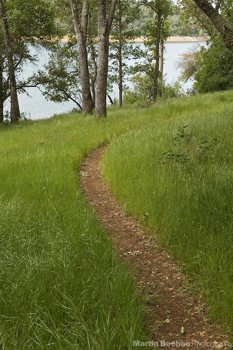 A hiking trail winds along Folsom Lake, Folsom Lake State Recreation Area, California