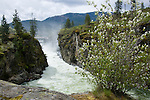 Idaho, Post Falls. The churning water of the Spokane River flows through a narrow gorge below the Post Falls Dam with Syringas in bloom on the rocks above.