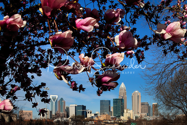 Reasons to Visit Charlotte, NC in the Spring