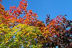 Autumn Splendor