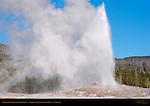 Old Faithful Geyser Eruption, Yellowstone National Park, Wyoming