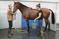 3/8/2010. Maria Falon from Meath and Sophie Anstey from Co Down are are pictured at the RDS  getting their horse Little Voice ready for the start of the Fáilte Ireland Dublin Horse show. Picture James Horan/Collins Photos