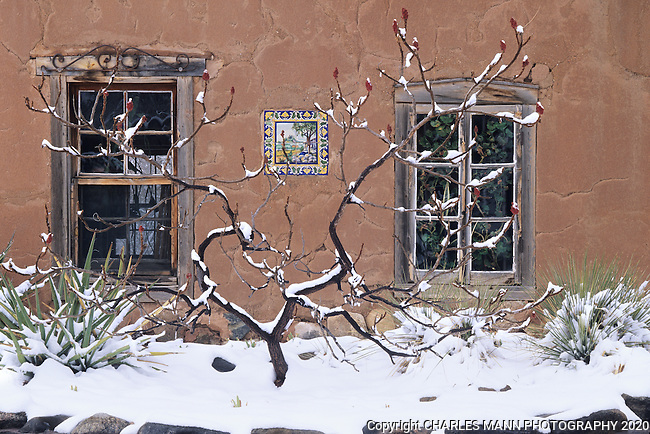 A knotty sumac seems like a kind of sculpture againast an adobe wall during a winter snofall in a Santa Fe, New Mexico, compund.