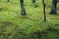 The moss gardens at Saiho-ji, also known as Kokoa-dera or the Moss Temple, have been tended for nine hundred years.