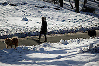 A woman walks her dogs inside central park during low temperatures in New York. 16.02.2015. Eduardo Munoz Alvarez/VIEWpress.