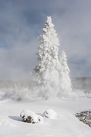 Ghost trees near thermal feature in Yellowston during winter
