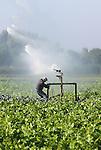 Foto: VidiPhoto<br /> <br /> ANDELST - Selecteur Mark de Wolf van groentenveredelaar Monsanto uit Wageningen verplaatst woensdag de beregeningsinstallatie op de proefvelden bij Andelst in de Betuwe. De duizenden verschillende kruisingen koolsoorten ter waarde van minstens een miljoen euro, staan te verdrogen op het land en daarom moet een waterkanon te hulp schieten. Op veel plaatsen worden de beregeningsinstallaties weer tevoorschijn gehaald omdat er al twee weken geen druppel regen is gevallen en veel gewassen nog geoogst moeten worden. De maand september is uitzonderlijk droog en warm.