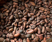 Raw Cocoa Beans - Nibs