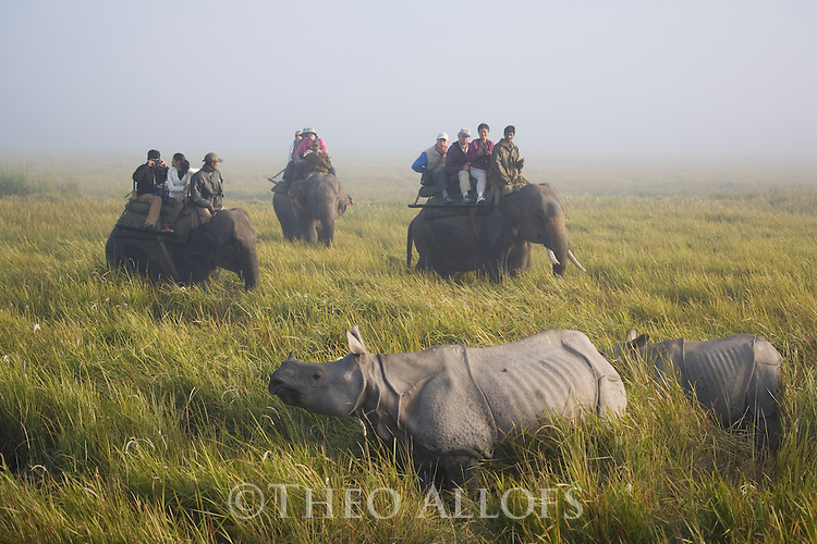 India, Kaziranga National Park, Tourists on elephant back watching Indian rhinoceros or Great One-horned Rhinoceros or the Asian One-horned Rhinoceros (Rhinoceros unicornis) mother with calf in tall elephant grass; morning fog<br /> Found in Nepal and in Assam, India. It is confined to the tall grasslands and forests in the foothills of the Himalayas