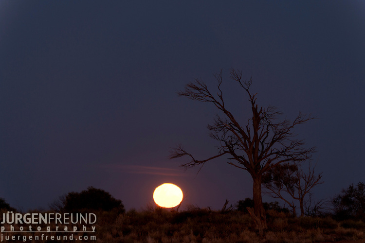Silhouette of a desert scene  at sunset