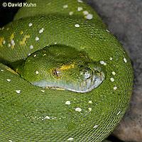 Snake Variety