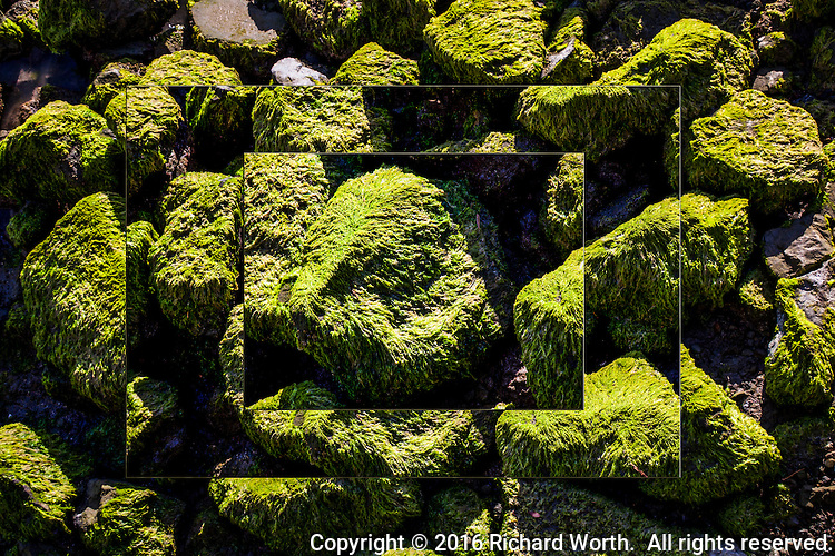Layer upon layer, moving in, zooming in.  Moss covered rocks along San Francisco Bay at the San Leandro Marina Park.