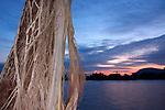 Strangler Fig with Sunset over Kampong Bay River, Kampot, Cambodia