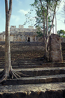 Structure VIII at the Mayan ruins of Calakmul, Campeche, Mexico. The Reserva de la Biosfera de Calakmul covers 7232 square km and was established in 1989. Calakmul was made a UNESCO World Heritage Site in 2002.