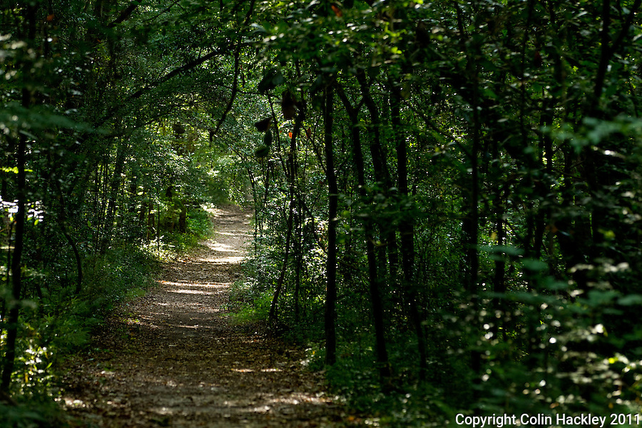 TOM BROWN PARK: Young trees arc over a multi use trail. .COLIN HACKLEY PHOTO