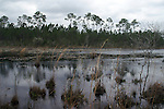 The pond reflects the dark clouds as the wind ruffles the water surface and the lily pads.  The water level is low, exposing the little hummocks on which shrubs and grasses have gotten a toe hold.
