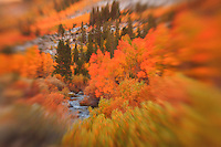 Table Mountain - Bishop Creek - Lensbaby