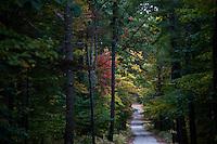Autumn leaves in western Massachusetts
