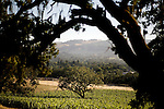 Sonoma vineyards, in Sonoma, Ca.